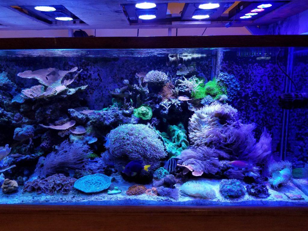 Custom Glass Aquariums